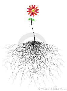 flower-roots-6769647